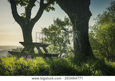 A Landscape Nature Image Of Bluebells And A Picnic Table In Woodland