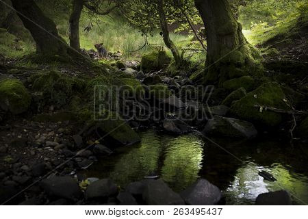 Nature, A Rural Woodland Landscape,with Tranquil Morning Light