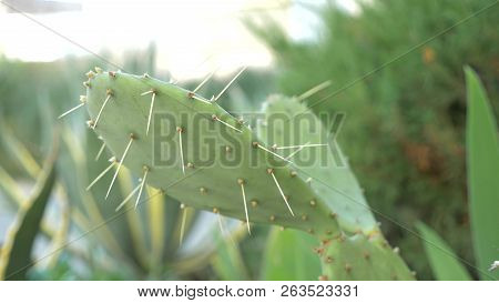 Exotic Plants. Close-up Of A Prickly Cactus.