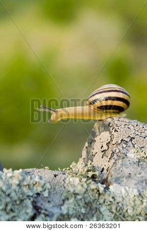 snail ready to jump from a cliff poster