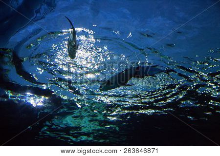 Fish On Water From Underwater Shot