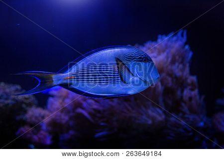 Blue Fish Swimming In Dark Water