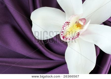 beautiful white orchid on purple satin