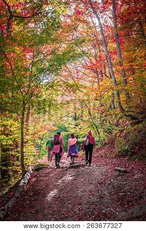 Autumn In Cozia, Carpathian Mountains, Romania. Young Women Walking In The Forest And Admiring The F