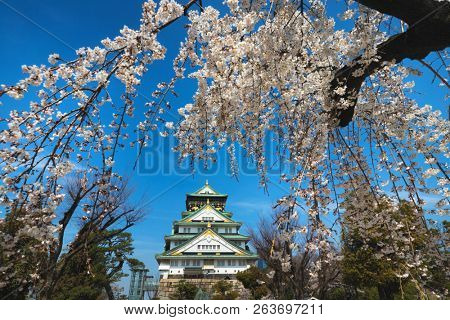 The Osaka castle surrounded with cherry tree flowers at spring, Japan
