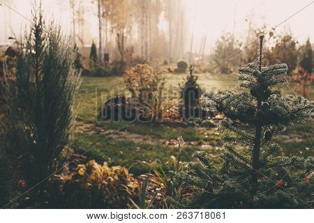Fog In Early Morning In Late Autumn Or Winter Garden. Frosty Beautiful Rural View With Pathway, Lawn