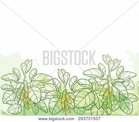 Vector Horizontal Bunch With Outline Soybean Or Soy Bean With Pods And Ornate Leaf In Pastel Green O