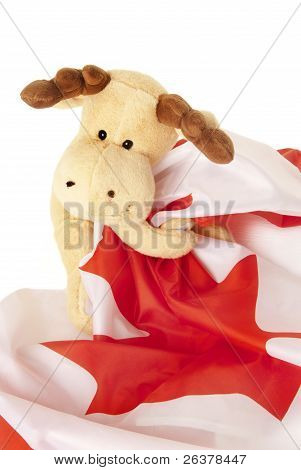 Moose Holding A Canadian Flag