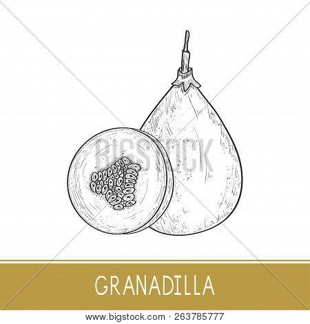 Granadilla. Fruit. Sketch. On A White Background. Monochrome.