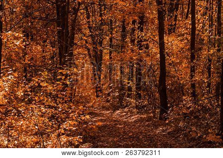 Trail Turns Into The Wilderness Of A Charming Autumn Forest With Orange Foliage Pure And No One Arou