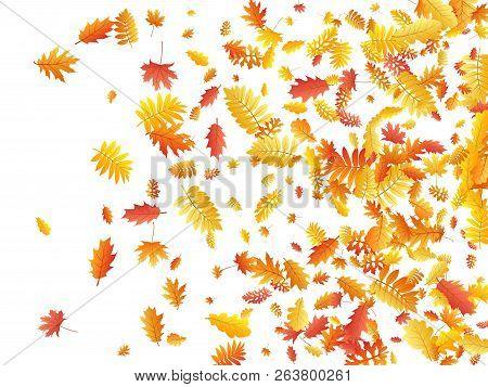 Oak, Maple, Wild Ash Rowan Leaves Vector, Autumn Foliage On White Background. Red Orange Gold Sorbus