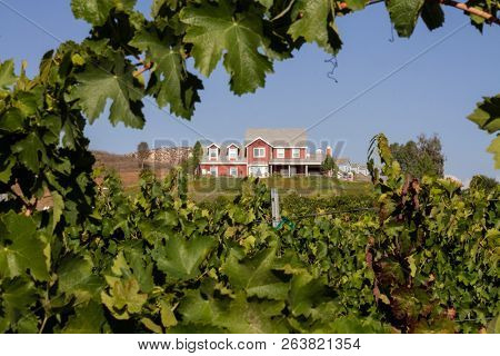 Rows of grape vines with a farm house hin the background