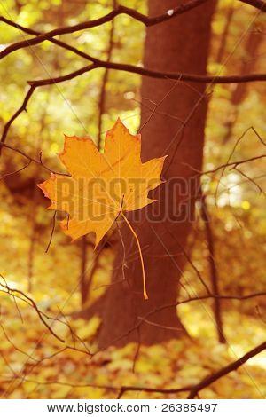 autumn last leave