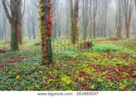 Park With Trees In Fog. Creepy Scenery In Late Autumn