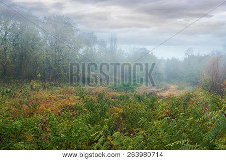 Park In Fog. Mysterious Autumn Scenery On An Overcast Day
