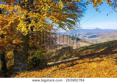 Handmade Wooden Bench Under The Tree In Fall Colors. Beautiful View In To The Distant Mountain. Wond
