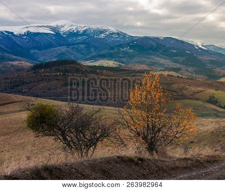Carpathian Countryside In November. Hills With Weathered Grass And Distant Mountain With Snowy Top O