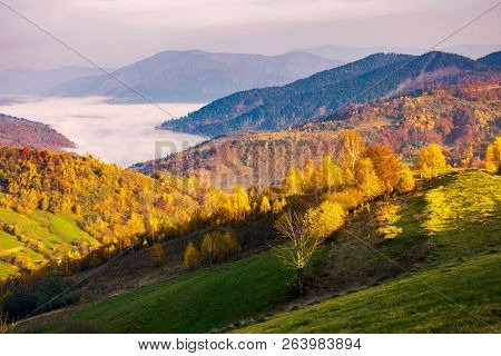 Beautiful Autumn Countryside. Trees In Yellow Foliage. Cloud Inversion In The Distant Valley