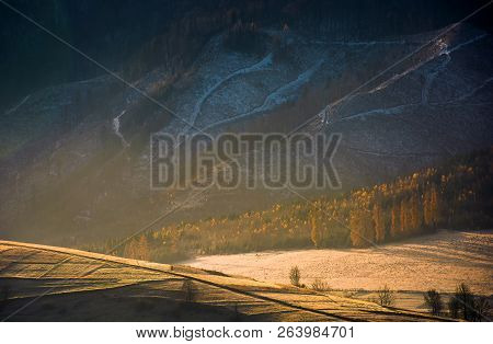 Lovely Autumn Scenery In Mountains. Forest On Hill In Golden Light And Haze. Beautiful Nature Backgr