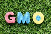 Color alphabet letter in word GMO (abbreviation of Genetically Modified Organisms) on artificial green grass background poster