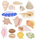 Shells vector marine seashell and ocean cockle-shell underwater illustration set of shellfish and clam-shell or conch-shell isolated on white background poster