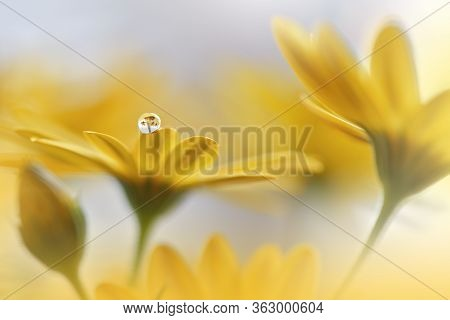 Beautiful Nature Background.Floral Art Design.Abstract Macro Photography.Daisy Flower.Pastel Flowers.Yellow Background.Creative Artistic Wallpaper.Wedding Invitation.Celebration,love.Close up View.Happy Holidays.Golden Color.Copy Space.