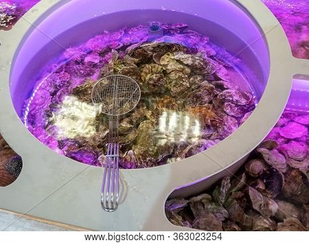 Iron Sieve And Oysters In Water For Cooking In Restaurants