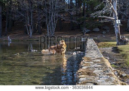 Dog Inside Of Lake