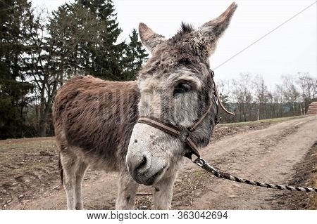 Donkey On A Hiking Trail- Hiking With Donkeys Becomes More And More Popular