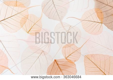 Background Floral Pattern Of Dry Tree Leaves