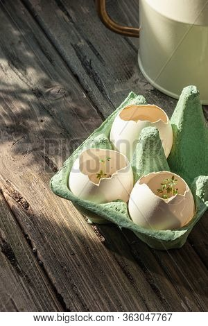Early Watercress In An Eggshell On The Background Of An Old Wooden Table