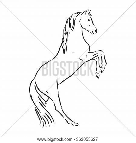 Running Horse Vector Illustration - Black And White Outline. Beautiful Horse, Horse Icon, Vector Ske