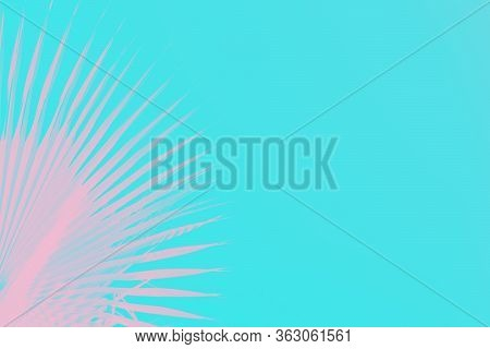 Pink Palm Leaves On Bright Aquamarine Aqua Color Vivid Background. Minimal Concept. Copy Space