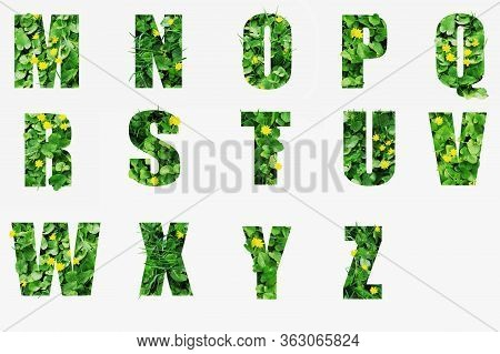 Letters M N O P Q R S T U V W X Y Z Made Of Green Grass Isolated On White.letters From Green Vegetat