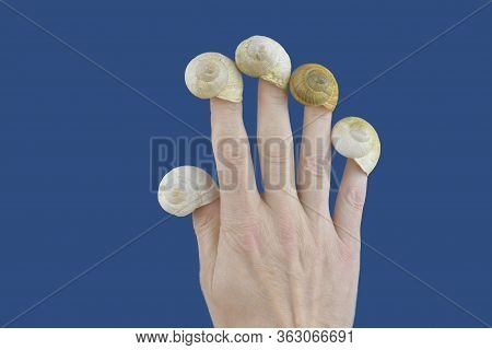 Empty Snail Houses On The Fingers Of A Hand. Empty Snail Shells. Mortgage Concept. Color Classic Blu