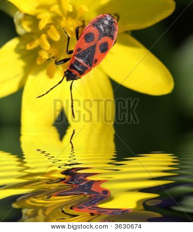 Beetle Soldier By The Water