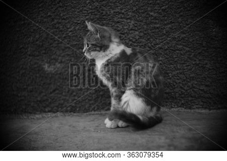 Cat Sitting Outdoors, Cute Kitty Relax, Bw Photo, Side View.