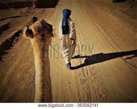 A Camel And A Berber Entering The Sahara Desert In Morocco