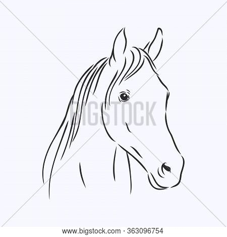 Realistic Horse Portrait Vector Illustration, Horse Portrait, Horse Head, Vector Illustration