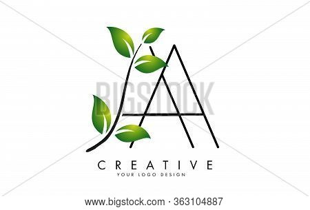 Leaf Letters Aa A Logo Design With Green Leaves On A Branch. Letters Aa With Nature Concept. Eco And