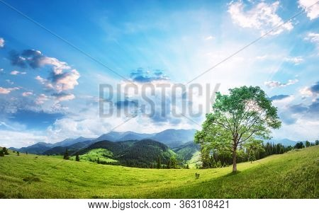Alpine valley with lone tree beautiful panorama. Fresh air of highland