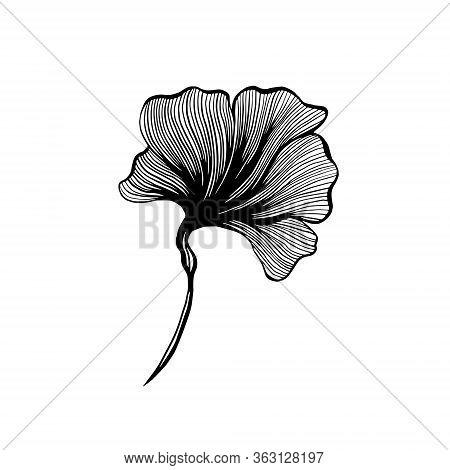 Ginkgo Leaf Ink Line Art Design, Vector Isolated Design Element With Wave Outline Drawing. Ginkgo Bi