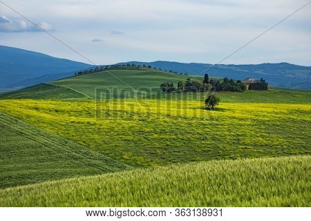 Tuscany spring, rolling hills on spring . Rural landscape. Green fields and farmlands. Italy, Europe