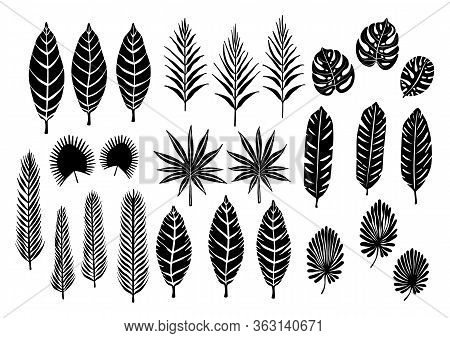 Tropical Plants, Banana, Monstera, Palm Leaves Silhouettes Set. Vector Illustration Isolated On A Wh