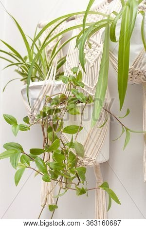 Macrame Plant Hangers In Scandinavian Interior. A 100 Percent Cotton Macrame Plant Hanger In Scandin