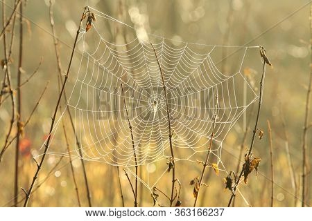 Spider web cobweb spiderweb dawn sunrise Nature background fall meadow morning field orange outdoor Nature background color Nature background vibrant autumn Nature background sun sunny Nature background sunshine Nature background season Nature background.