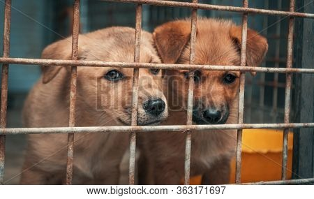 Sad Puppies In Shelter Behind Fence Waiting To Be Rescued And Adopted To New Home. Shelter For Anima