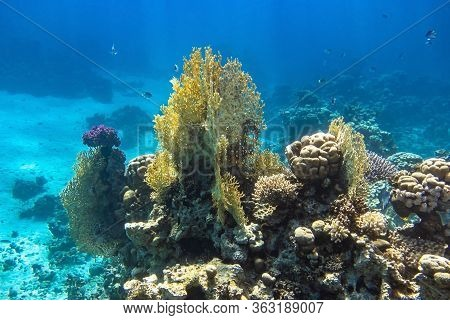 Coral Reef In Red Sea, Egypt. Blue Turquoise Ocean Water, Different Types Of Hard Corals. Branching