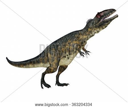Terrifying Giganotosaurus Dinosaur Roaring Head Up Isolated In White Background - 3d Render