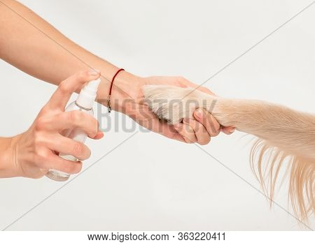 Girls Hand Holding Dogs Paw To Disinfect With A Sanitizer. Studio Shot, Paws Care, Health Care